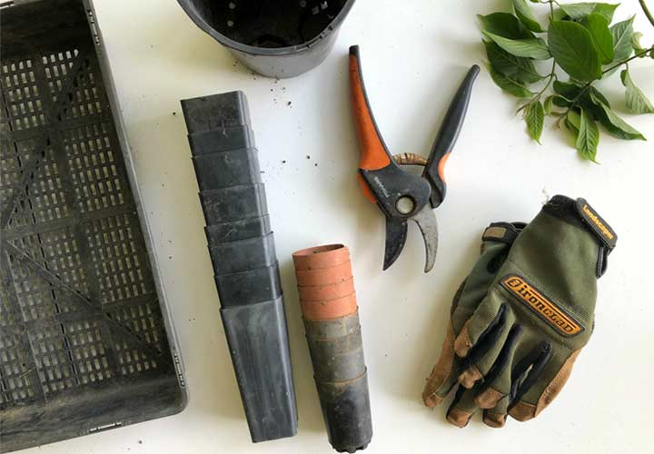 basic gardening tools